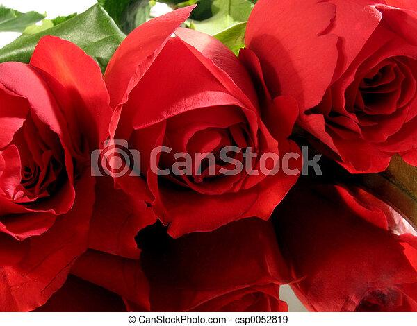 rosas, 3, vermelho - csp0052819