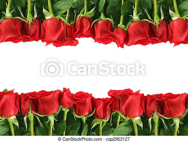 Filas de rosas rojas en blanco - csp2953127