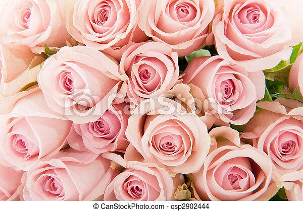 rosas cor-de-rosa - csp2902444