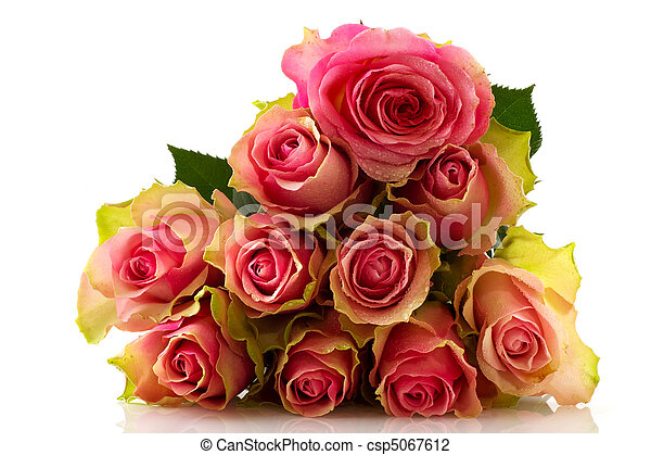 rosas cor-de-rosa - csp5067612