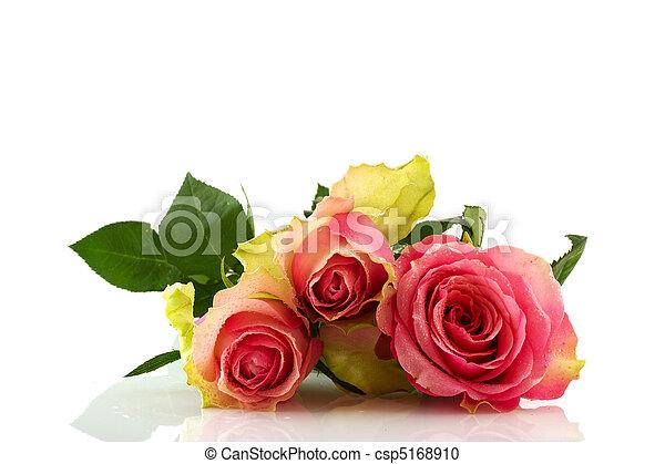 rosas cor-de-rosa - csp5168910