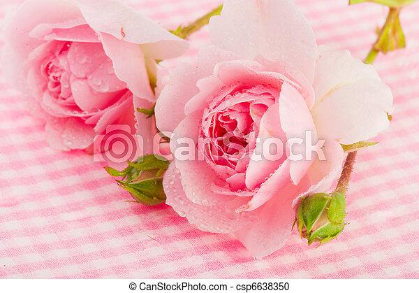 rosas cor-de-rosa - csp6638350