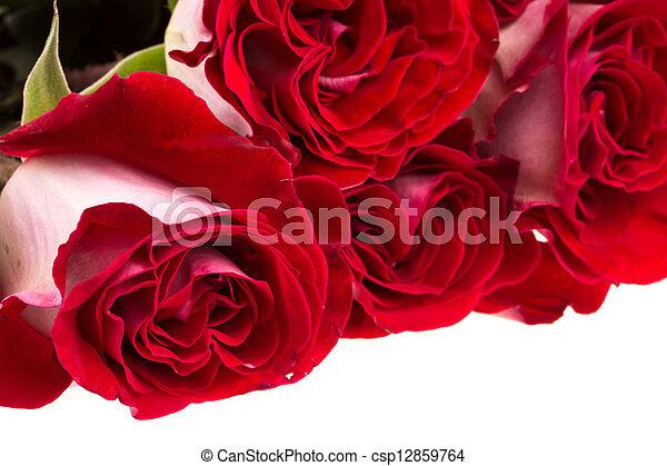 rosas cor-de-rosa, branca, isolado - csp12859764