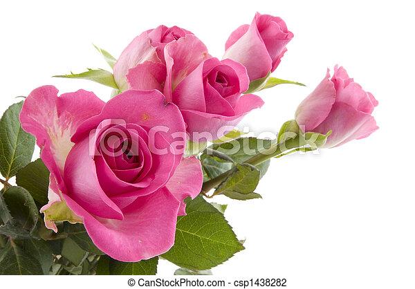 rosas cor-de-rosa, flores - csp1438282