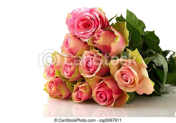 rosas cor-de-rosa - csp5067611