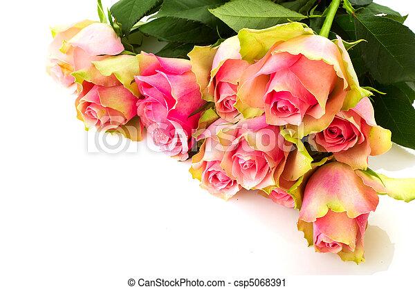 rosas cor-de-rosa - csp5068391