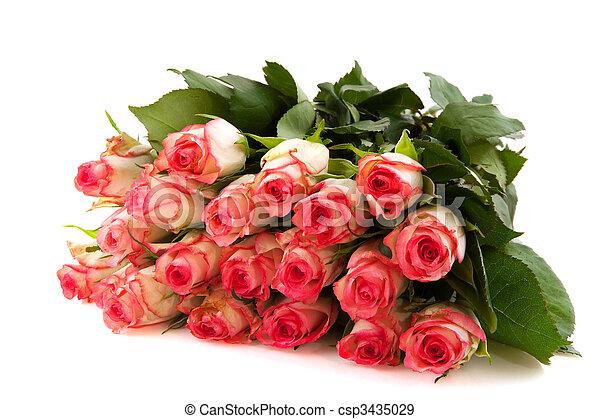 rosas cor-de-rosa - csp3435029