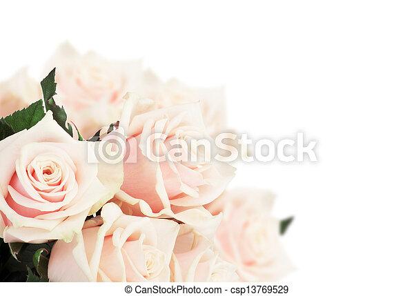 rosas rosa - csp13769529