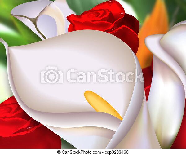 Rosas de Calcallas Callas - csp0283466