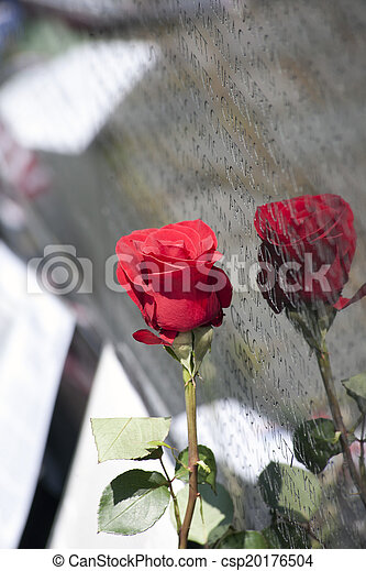 Rose against the Wall - csp20176504