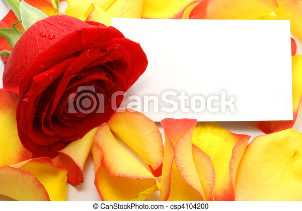 Rose and message on a petals. Background - csp4104200