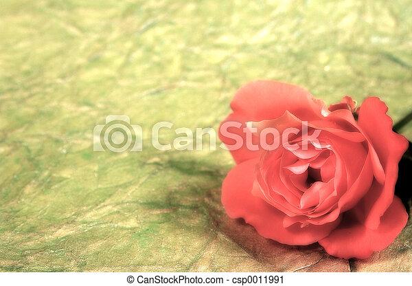 Rose Backbround - csp0011991
