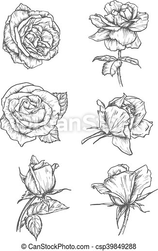 Rose Buds Icons Flower Sketch Emblems Roses Buds Icons Vector