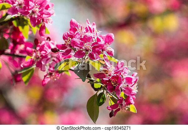 rose cerise fleurs arbre fleur rose fleur printemps. Black Bedroom Furniture Sets. Home Design Ideas