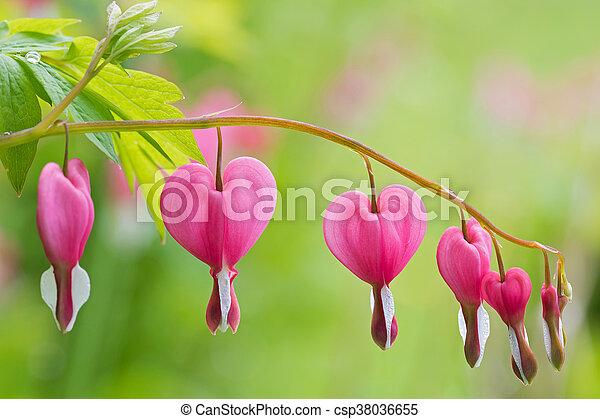 Rose Coeur Fleur Forme Coeur Saignement Apres Foyer Pluie