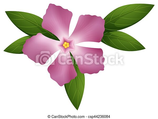 Rose Couleur Fleur Pervenche
