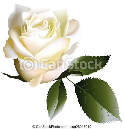 Rose Feuilles Fleur Blanc Realiste