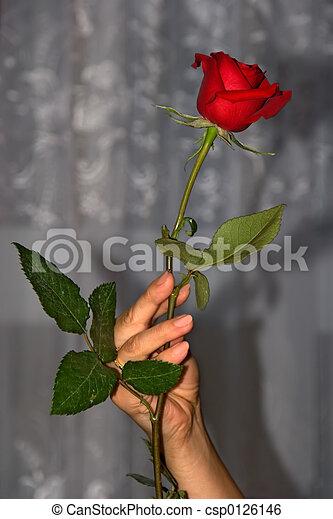 rose, fleurs, 01 - csp0126146