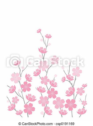 rose, fleurs cerise - csp0191169