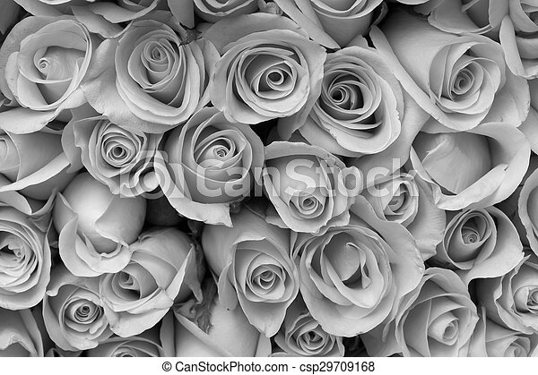 Rose Flower Bouquet Black And White Background