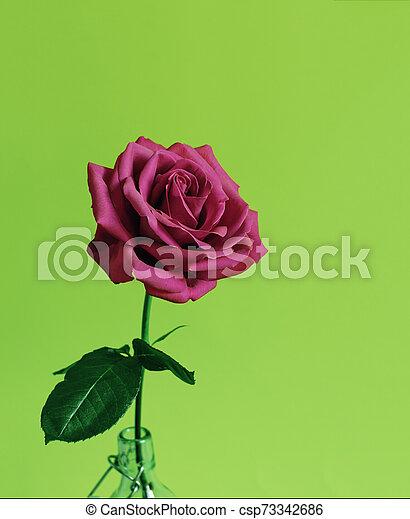 Rose flower on bright background. - csp73342686