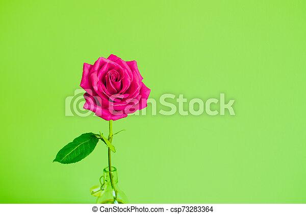 Rose flower on bright background. - csp73283364