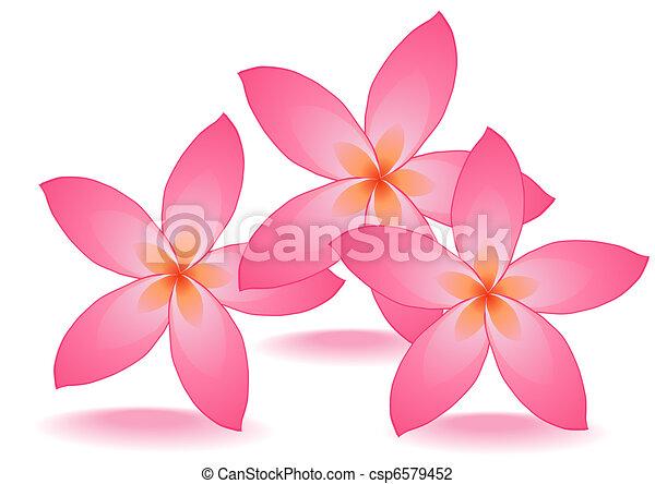 rose flowers     - csp6579452