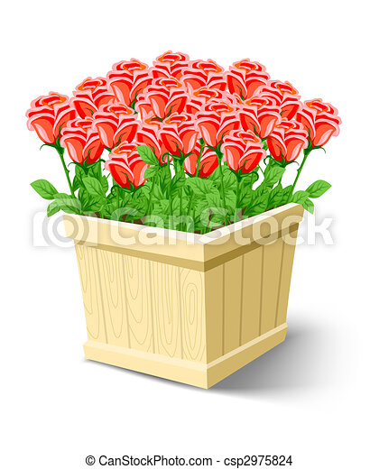 Drawing of rose flowers in box isolated on white background stock illustration rose flowers in box isolated on white ccuart Image collections