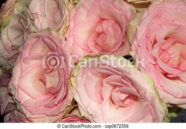 Rose Flowers - csp0672359