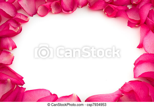 rose, fond blanc, pétales - csp7934953