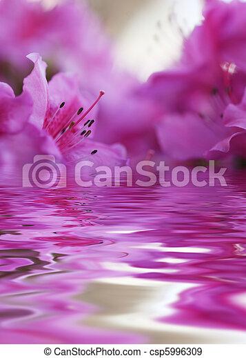 rose, gros plan, peu profond, dof, flower., blossom., foyer, pistil, azalée, stamens. - csp5996309