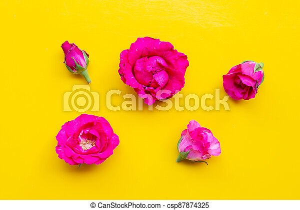 Rose on yellow background. Top view - csp87874325