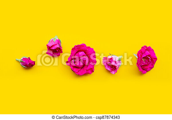 Rose on yellow background. Top view - csp87874343