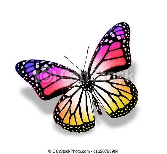 Rose papillon isol violet blanc couleur papillon - Papillon dessin couleur ...