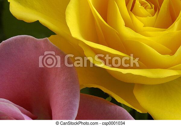 rose petals - csp0001034