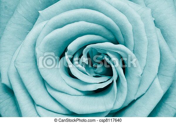 rose petals - csp8117640