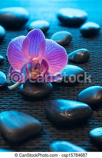 orchidee rose et bleu