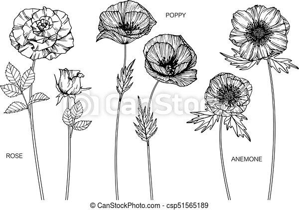 Rose poppy anemone flower drawing mightylinksfo