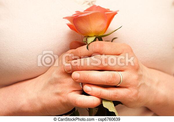 rose - csp6760639