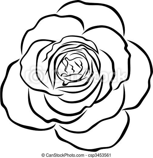 rose - csp3453561