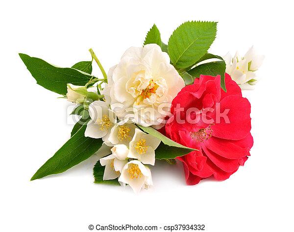 Rose with jasmine isolated on white background. - csp37934332