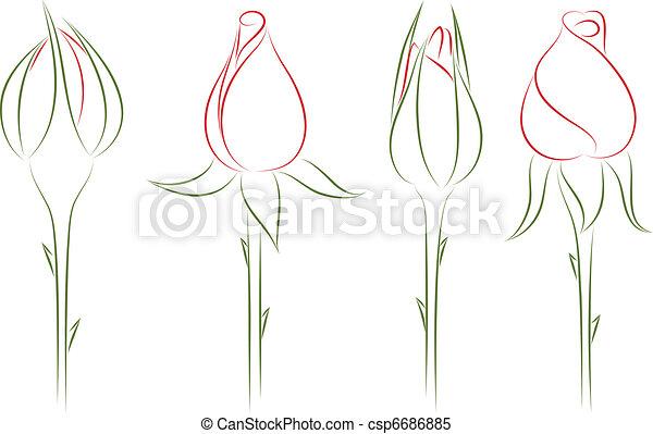 Rosebuds Vettore Illustration Germogli Illustration Quattro