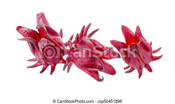 Roselle Hibiscus Sabdariffa Red Fruit Flower On White Stock