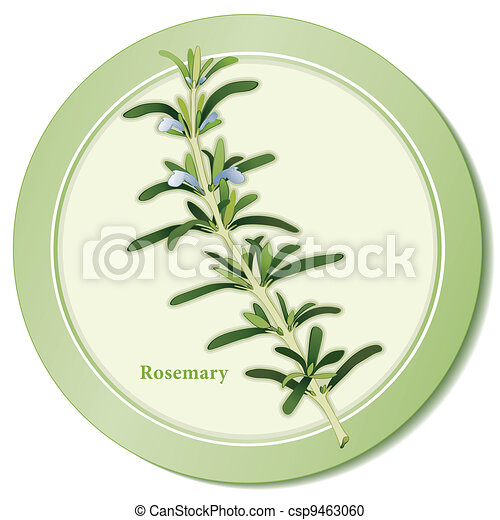 Rosemary Herb Icon - csp9463060