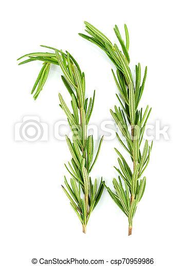 Rosemary isolated on white background - csp70959986