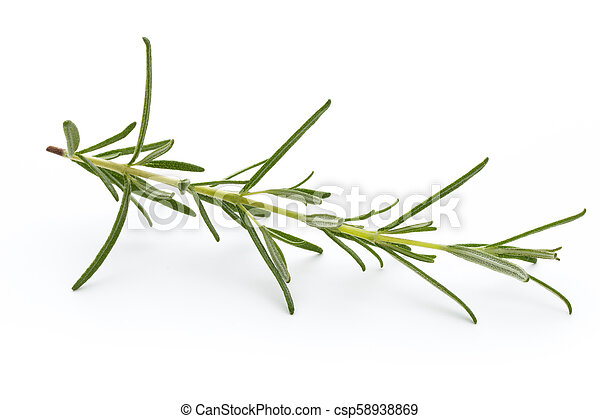 Rosemary isolated on white background, Top view. - csp58938869