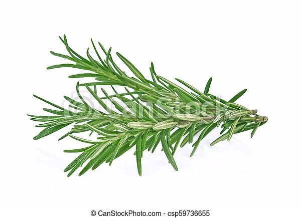 Rosemary isolated on white background - csp59736655