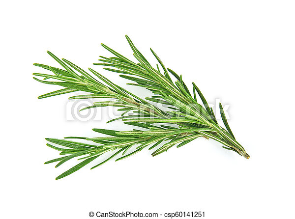 Rosemary isolated on white background - csp60141251