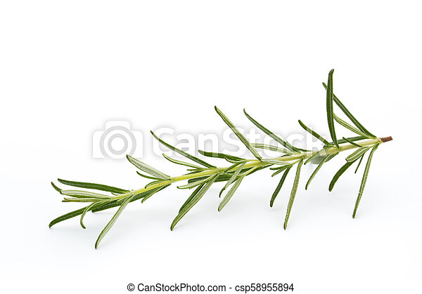 Rosemary isolated on white background, Top view. - csp58955894