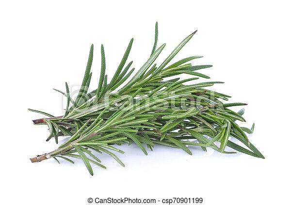 Rosemary isolated on white background - csp70901199